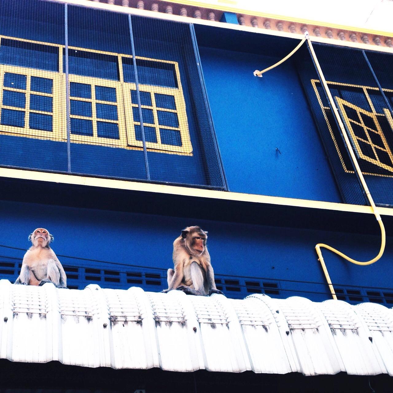 芬格林青年旅馆,เฟิร์นกัลลี โฮสเทล