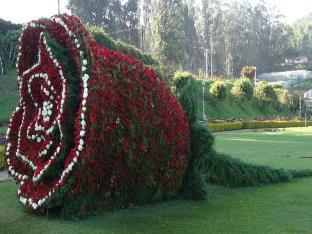 Deccan Park Resort Ooty - Rose Garden