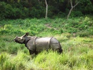 Royal Park Hotel Chitwan National Park - Rhino sighting during Elephant-back Safari