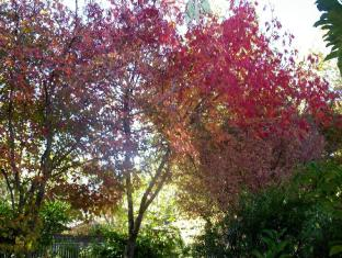 Adelaide Hills Bed & Breakfast Accommodation Adelaide - Autumn in the garden