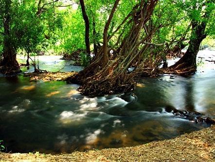 德王通自然公园度假村,เนเชอรัลปาร์ค รีสอร์ท เดอ วังทอง