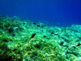 Panglao Kalikasan Dive Resort Bohol - Atrações próximas