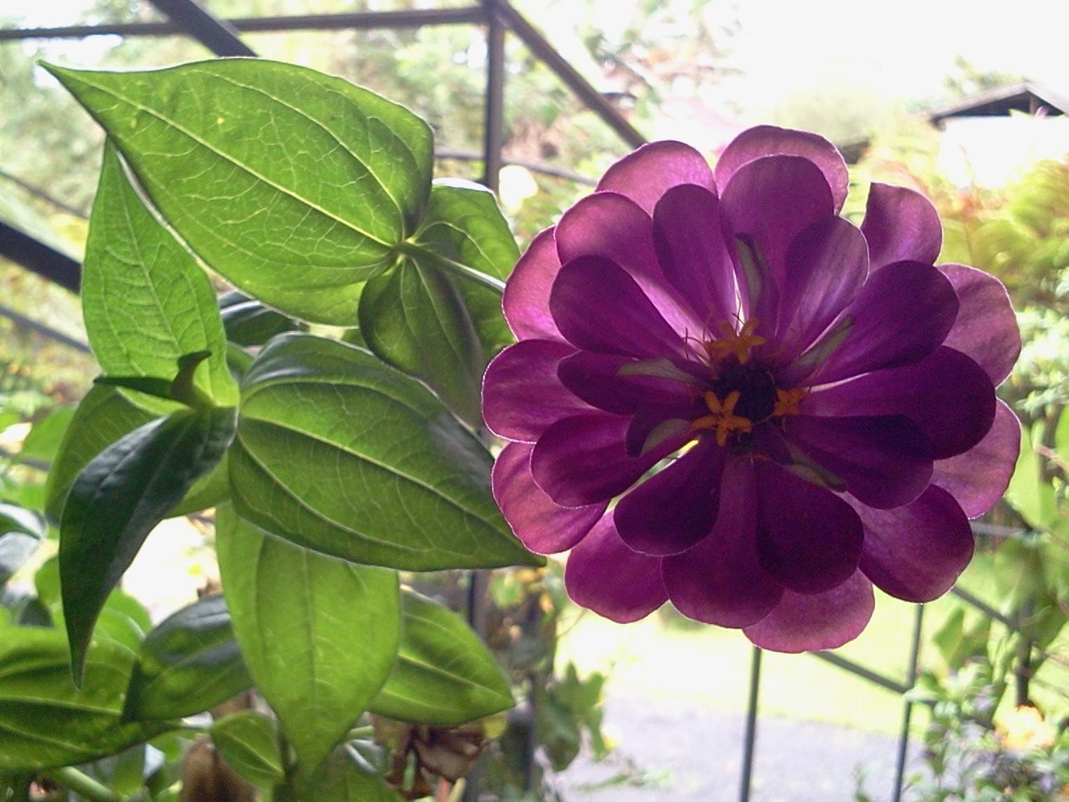 Happy Flower Resort picture