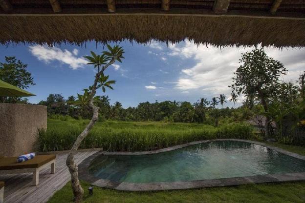 Exquisite Rice View + Breakfast  @Ubud