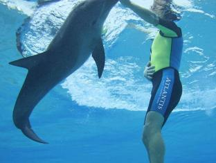 Atlantis The Palm Dubai Dubai - Dolphin Bay - Swim with Dolphins in Dubai
