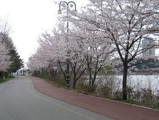 Tong Yang Resort Sokcho-si - Surroundings