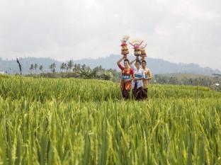 Kelapa Retreat and Spa Hotel Bali Bali - rice field