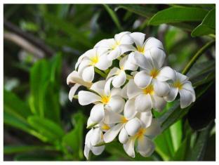 เชนู บูติก รีสอร์ท เพชรบุรี - สวน