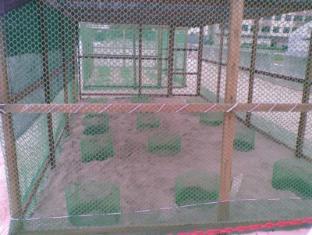 Glory Beach Resort Port Dickson - Turtles Hatchery Program
