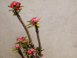 Alumbung Tropical Living Panglao Island - Flowers