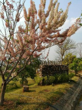 Phupaikaew Resort Pai
