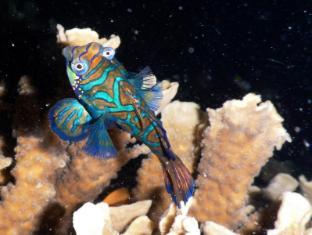 Quo Vadis Dive Resort Моалбоал - Цікаві місця поруч