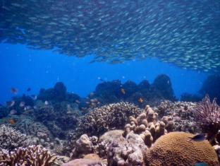 Quo Vadis Dive Resort Moalboal - Sport og aktiviteter