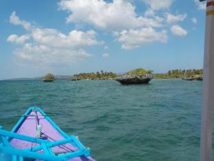 Sea Turtle House Moalboal - Half day boat tour