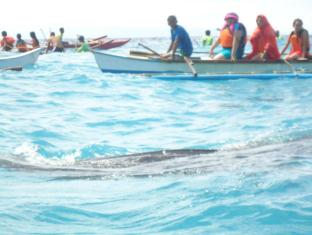 Bonita Oasis Beach Resort Moalboal - Whale shark watching at Oslob