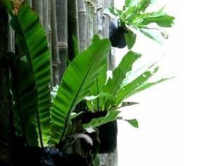 Woodpecker Lodge Kuching - Decoration