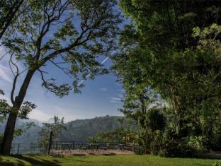 Mandira Strathdon Bungalow Nuwara Eliya - Garden