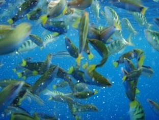 White Beach Bungalows Bantayan Island - Coral Garden - Snorkeling