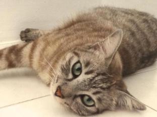 Rumah Putih B & B Kuala Lumpur - House Cat