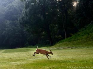 Gokarna Forest Resort Katmandou - Parcours de golf