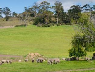 Daisy Bank Cottages Hobart - Garden
