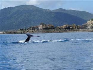 Airlie Beach Myaura Bed and Breakfast Whitsunday Islands - المناطق المحيطة