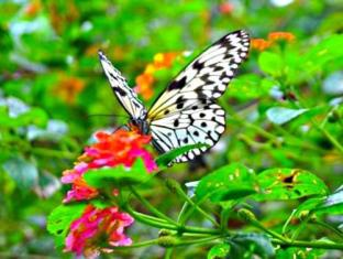 Piazza Luna Tower Davao City - Nearby Attraction - Butterfly Sanctuary