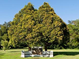 Dornier Homestead Stellenbosch - Heart shaped trees