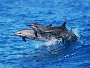 The Cove House Bed & Breakfast Panglao Island - Tours- Dolphin Watching
