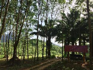 Khao Sok Evergreen House