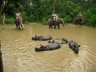 Eden Jungle Resort Chitwan - Elephant Back safari in chitwan national park
