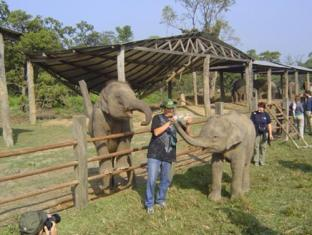 Eden Jungle Resort Chitwan - Activity