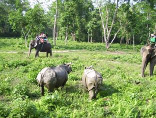 Eden Jungle Resort Chitwan - Elephant safari in chitwan national park