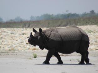 Eden Jungle Resort Chitwan - Rhino in the chitwan national park