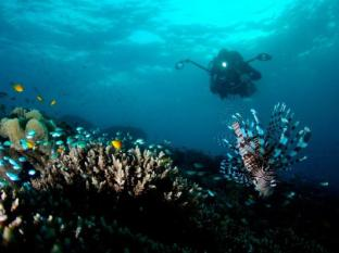 Amun Ini Beach Resort & Spa Anda - Scuba diving