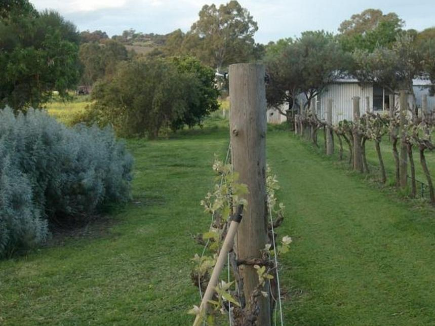 Mclaren Vale Wirra Wirra Vineyard Winery Tour Including