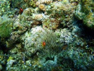 パンラオ カリカサン ダイブ リゾート パングラオ アイランド - 観光地周辺