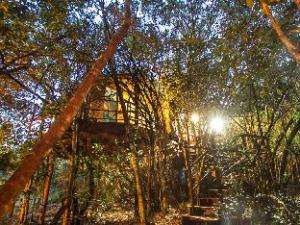 Teniqua Treetops Tented Treehouse Resort