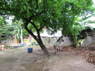 Papa Kit's Marina Resort Liloan - Horse Riding