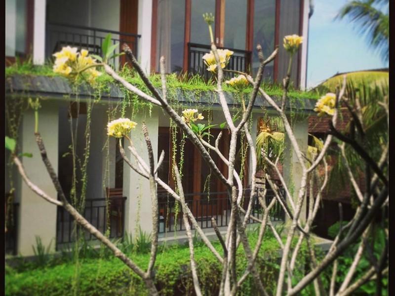 Nani House 2