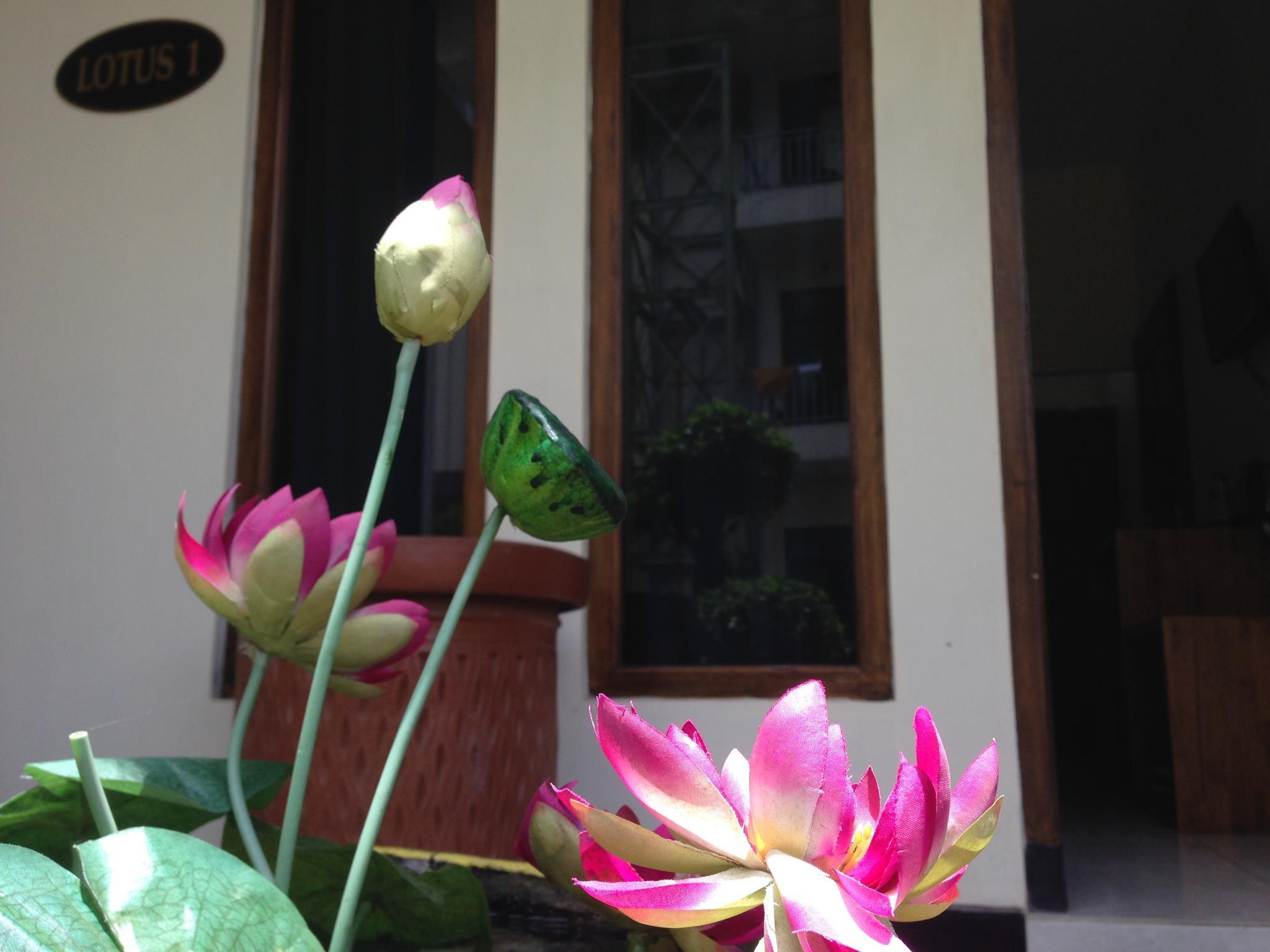 Dieng Kledung Pass   Lotus Room 1