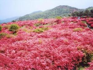 Kyukamura Kesennuma-Ohshima National Park Resorts of Japan