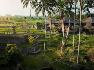 Kamandalu Ubud Resort Bali - Rice Paddies - Day time