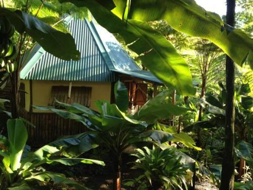 Roots Jungle Retreat