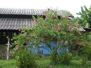 Good Morning Pai House