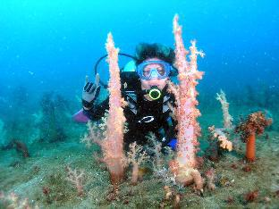 picture 3 of Bentrina Diving Resort