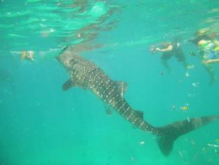 Alta Cebu Resort Mactan Island - Swim with Whale Shark