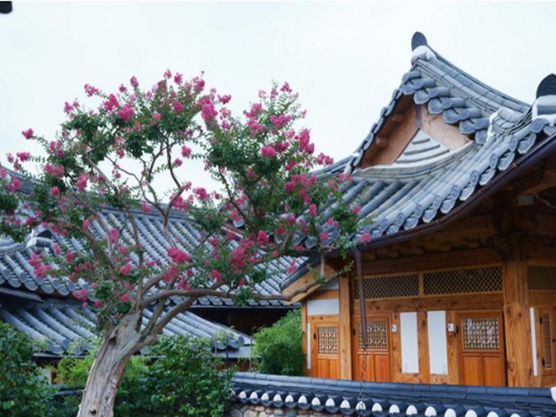 Dajeong Guesthouse