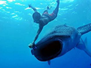 picture 5 of MDF Beach Resort and Day Tours near Whalesharks