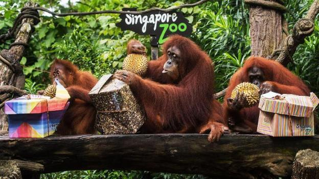 Singapore Zoo - TICKETS ONLY